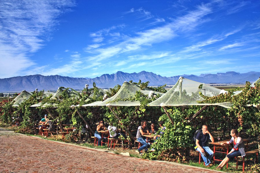 Riebeek Valley Olive Festival